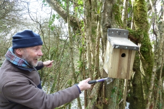 Volunteer putting up a nest box