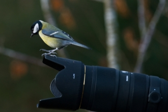 bird on camera - Bob Coyle