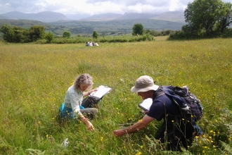 Vegetation monitoring at Caeau Tan y Bwlch Nature Reserve