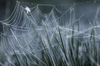 spiders web in frost, Guy Edwardes - 2020vision