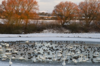 winter wading birds, Rob Jordan - 2020vision