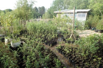 Aberduna Tree Nursery