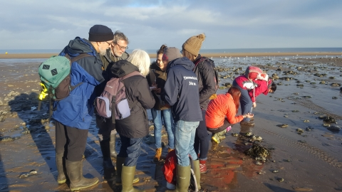 Survey Saturdays with NWWT Living Seas Wales