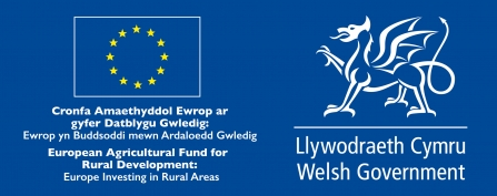 Welsh Government - SMS logo
