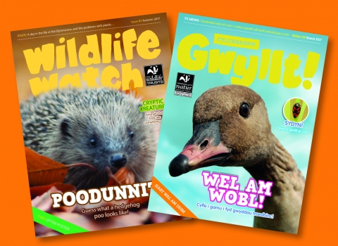 Wildlife Watch and Gwyllt! magazines