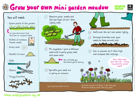 Grow your own mini meadow garden Activity Sheet